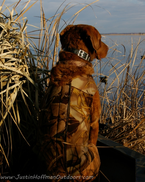 Duck Hunting Dog - Print #09