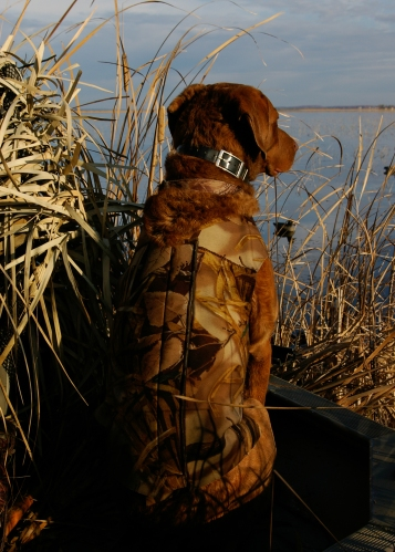 Duck Hunting Dog - Card #3