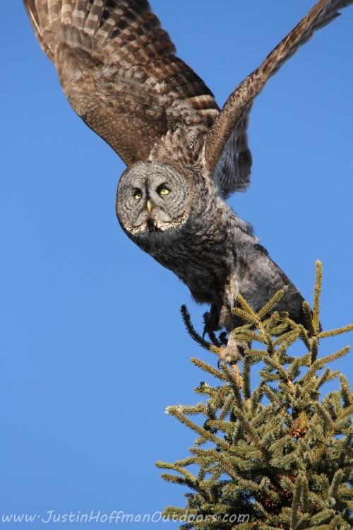 Owl05
