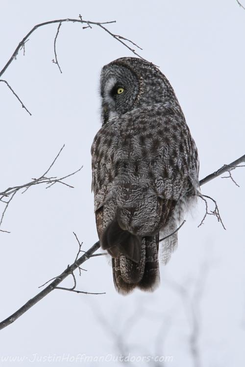Owl21